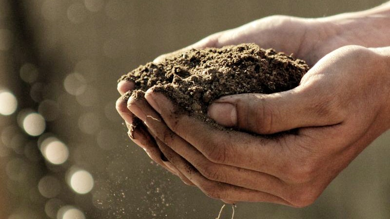 Erde, Kompost, pflanzen, Garten