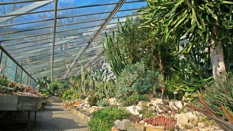 Das Tropenhaus in Planten un Blomen