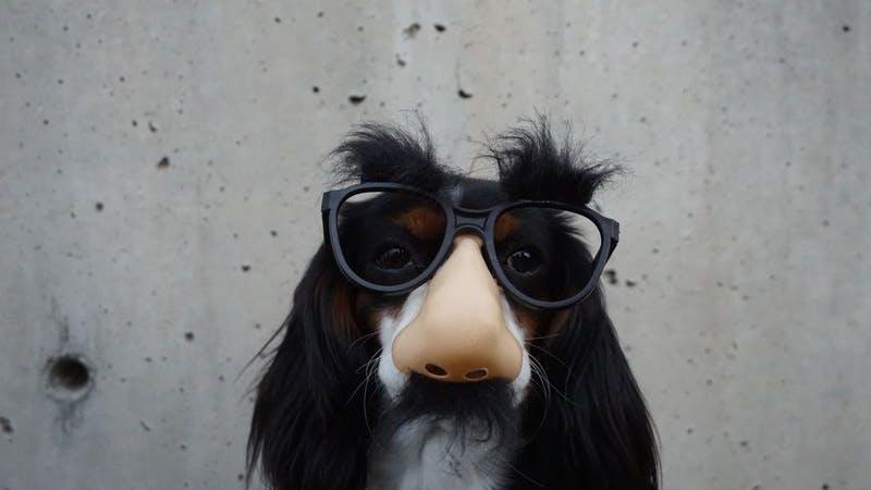 Hund, Kostüm