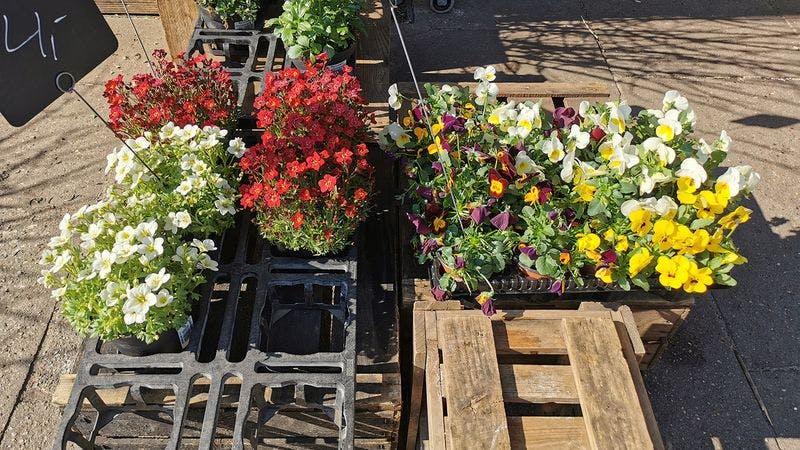 Bumenladen im Hamburger Blumenladen Das Kleine Grüne
