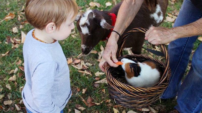 Kind Tiere Hase Ziege Bauernhof