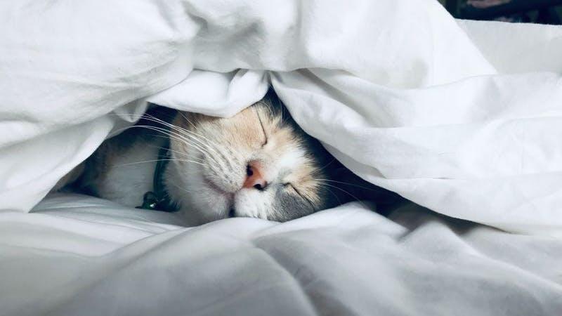 Katze Schlaf Bett