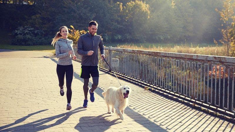 Joggen, Fitness, Paar, Hund, Laufen, Laufstrecke