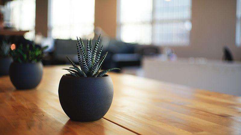 Büro mit Pflanzen