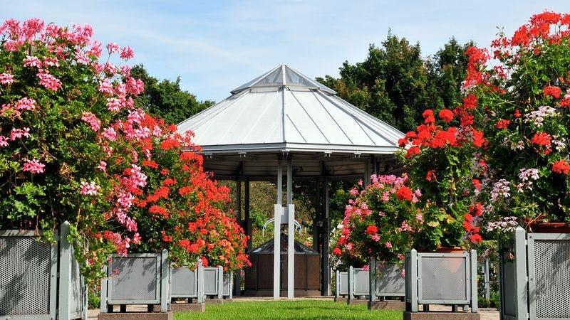 Rosengarten in Planten un Blomen