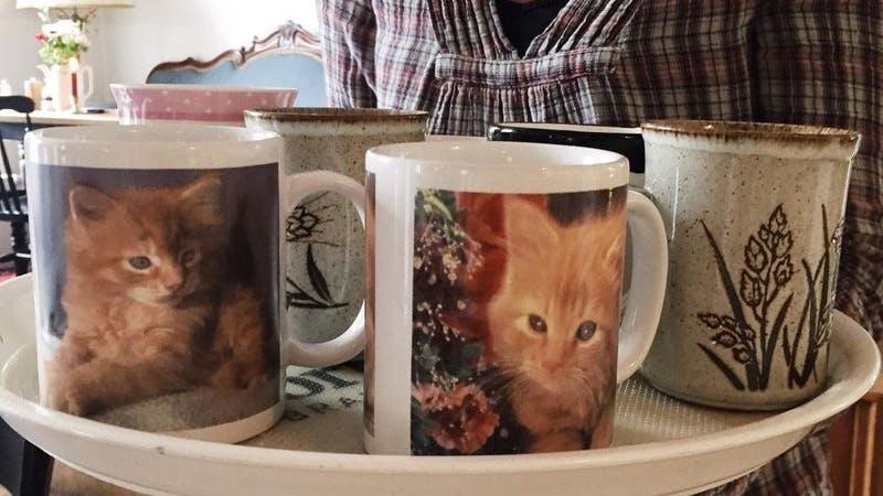 Das LüttLiv sammelt eure alten Kaffeebecher, besonders beliebt sind Katzenmotive