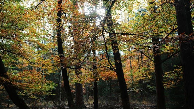 Herbst, Wald, Blätter