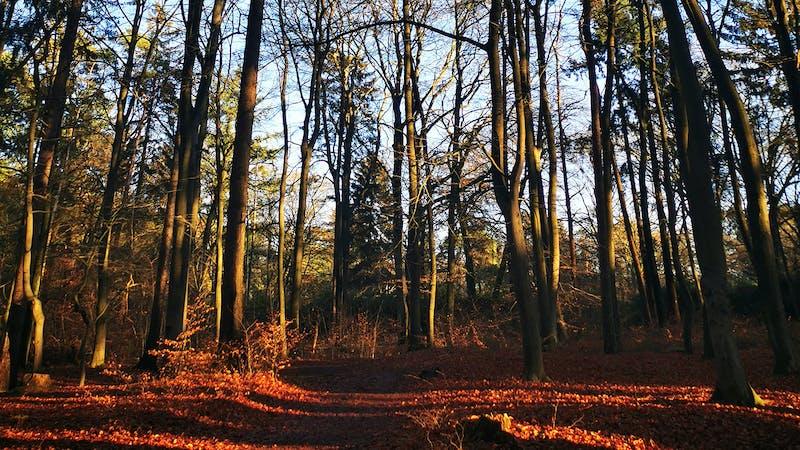 Klövensteen Wald