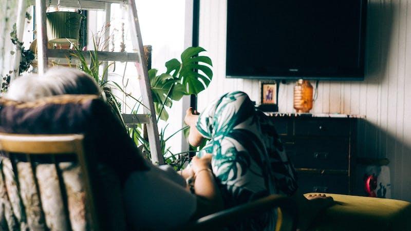 Fernsehen, Pflanzen, Zuhause