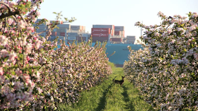 Apfelplantage Landkreis Stade
