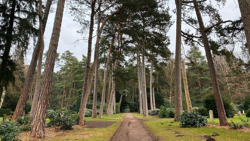 Waldweg im Ohlsdorfer Friedhof
