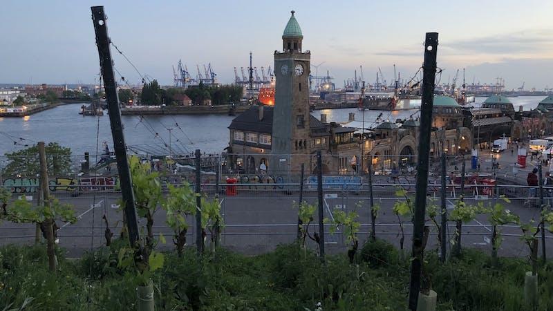 Hamburgs Weinberg auf dem Stintfang