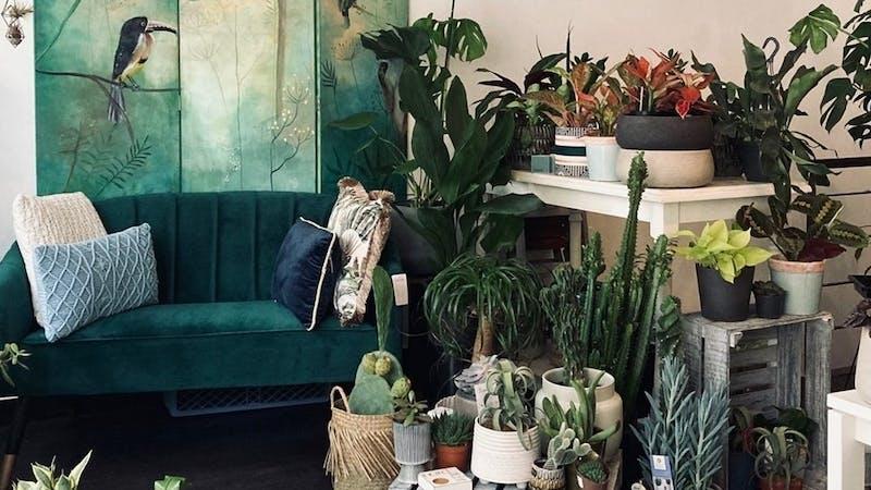 Pflanzen und Accessoires in der CASOU Greenery